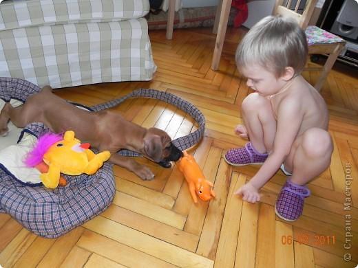 Вот такой малыш,однажды,появился у нас в доме))))...... фото 3