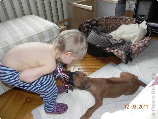Вот такой малыш,однажды,появился у нас в доме))))...... фото 10