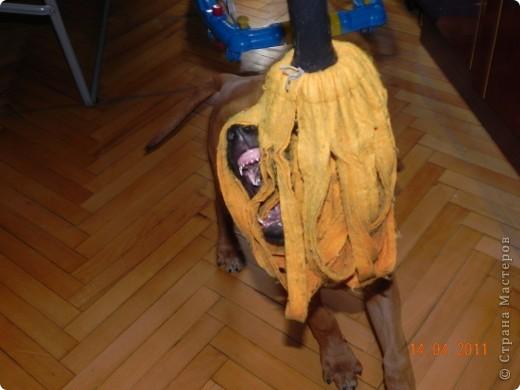 Вот такой малыш,однажды,появился у нас в доме))))...... фото 16