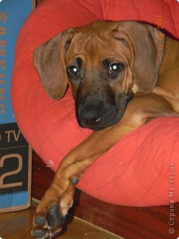 Вот такой малыш,однажды,появился у нас в доме))))...... фото 20