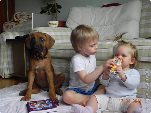 Вот такой малыш,однажды,появился у нас в доме))))...... фото 17