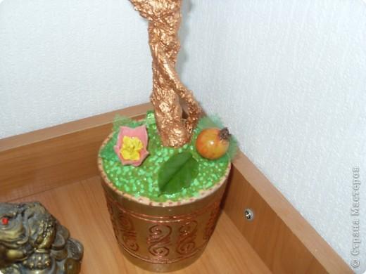 Яблонька фото 3