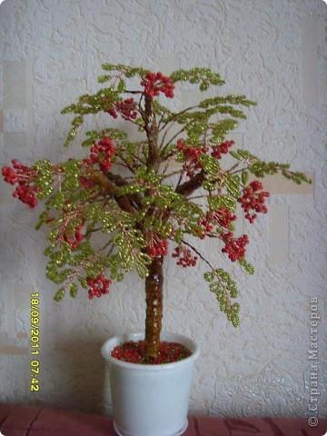 букет роз фото 3