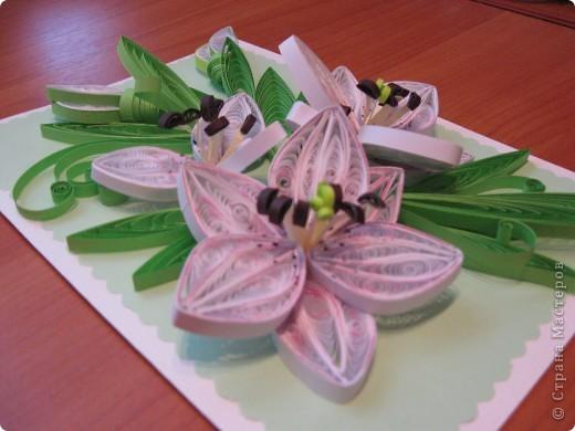 лилии- повторюшки+сладкий букет фото 3