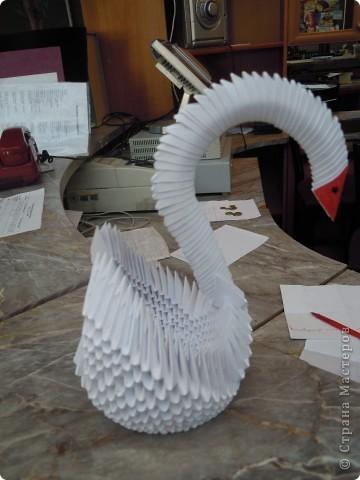 Белая лебедь