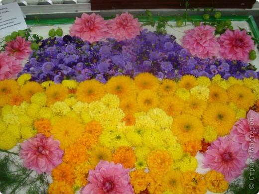 В нашей школе проходила выставка цветов посвященная 20 годам независимости Украины. Первую работу на ваш суд выношу моей дочки Насти (конечно под маминым руководством). фото 20