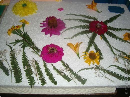 В нашей школе проходила выставка цветов посвященная 20 годам независимости Украины. Первую работу на ваш суд выношу моей дочки Насти (конечно под маминым руководством). фото 7