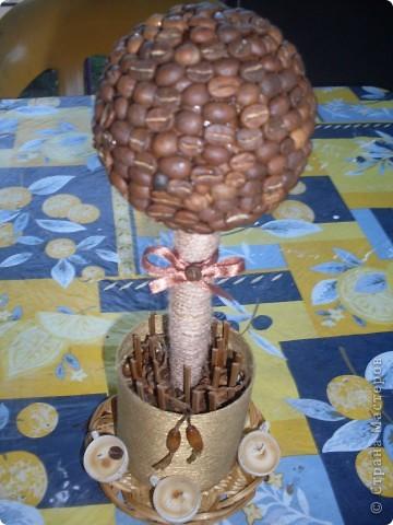 Кофейное деревце на день рождения девушке моего брата фото 2