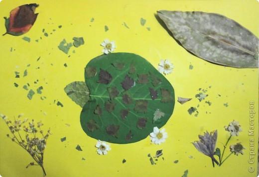 Решила я предложить своим четвероклассникам сделать аппликацию из листьев. Вот что у них получилось. Выкладываю только самые оригинальные работы. Рыбки, бабочки и букеты остались на выставке в классе.  Тарасов Андрей сделал березку из нарезанных листьев. фото 5