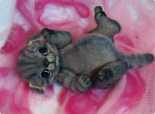 Мило мурлыкающая голубоглазая малышка, так нуждается в тепле и заботе! Она совсем еще кроха)) фото 2