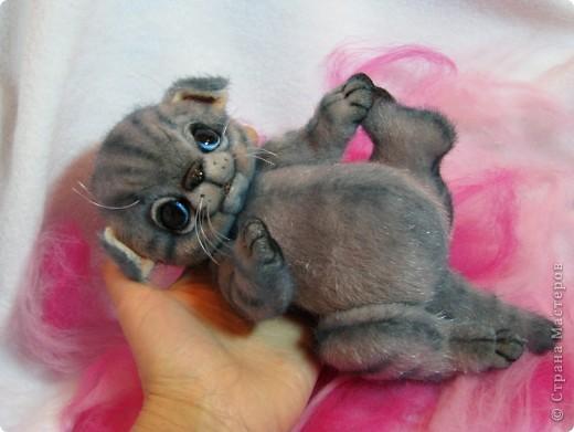 Мило мурлыкающая голубоглазая малышка, так нуждается в тепле и заботе! Она совсем еще кроха)) фото 1