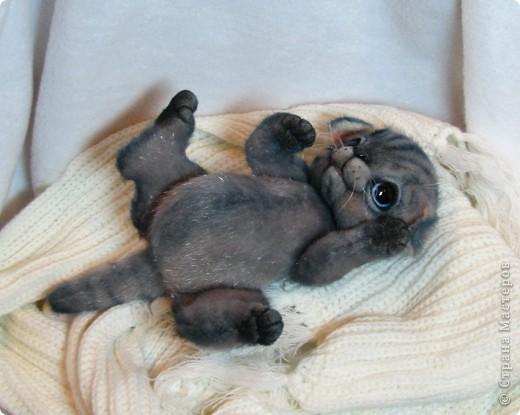 Мило мурлыкающая голубоглазая малышка, так нуждается в тепле и заботе! Она совсем еще кроха)) фото 4