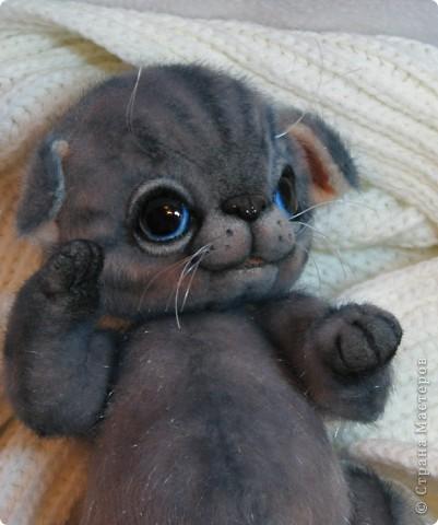Мило мурлыкающая голубоглазая малышка, так нуждается в тепле и заботе! Она совсем еще кроха)) фото 7
