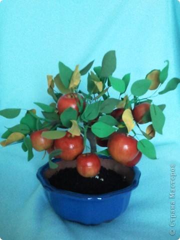 Бонсайная болезнь была долгой и заразной. Выкладываю еще один результат. Яблочки куплены готовыми. Они мне очень приглянулись и даже стали причиной этого бонсайчика. фото 1