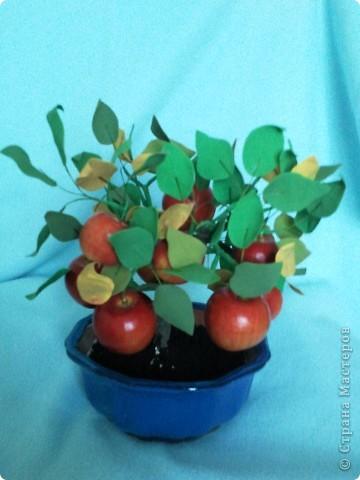 Бонсайная болезнь была долгой и заразной. Выкладываю еще один результат. Яблочки куплены готовыми. Они мне очень приглянулись и даже стали причиной этого бонсайчика. фото 2