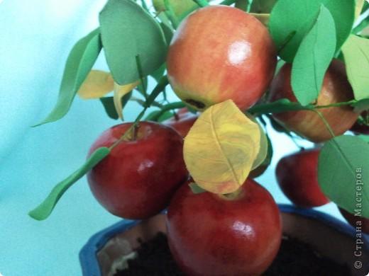 Бонсайная болезнь была долгой и заразной. Выкладываю еще один результат. Яблочки куплены готовыми. Они мне очень приглянулись и даже стали причиной этого бонсайчика. фото 3