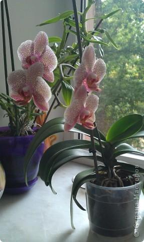 """Сегодня хочу показать свою работу в технике """" Кристальные цветы""""  Орхидея """"бабочка"""". фото 7"""