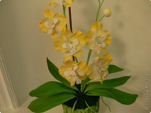 """Сегодня хочу показать свою работу в технике """" Кристальные цветы""""  Орхидея """"бабочка"""". фото 3"""
