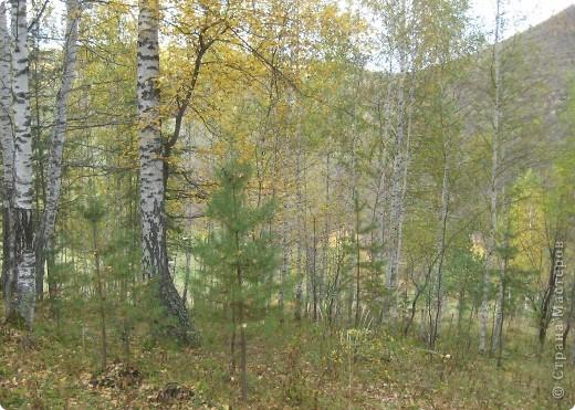 Тихой охотой назвал С. Т. Аксаков сбор грибов. Настоящий грибник, как и охотник, встречает солнце в лесу уже с трофеями. Время, проведенное в увлекательной охоте за грибами,- бодрая зарядка, познание удивительных грибных тайн. фото 19