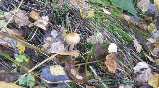 Тихой охотой назвал С. Т. Аксаков сбор грибов. Настоящий грибник, как и охотник, встречает солнце в лесу уже с трофеями. Время, проведенное в увлекательной охоте за грибами,- бодрая зарядка, познание удивительных грибных тайн. фото 12