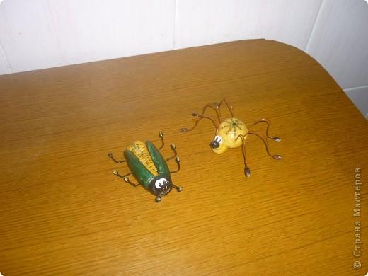 Жуки пауки фото 1