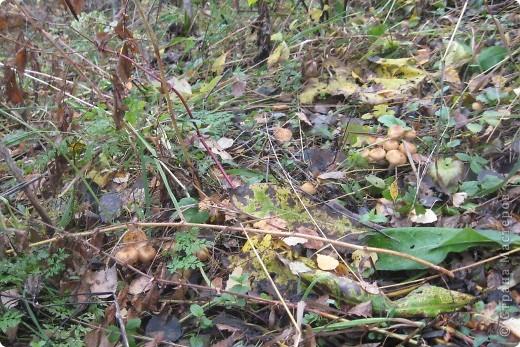 Тихой охотой назвал С. Т. Аксаков сбор грибов. Настоящий грибник, как и охотник, встречает солнце в лесу уже с трофеями. Время, проведенное в увлекательной охоте за грибами,- бодрая зарядка, познание удивительных грибных тайн. фото 11