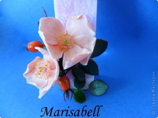 Веточка с нежными цветочками и плодами шиповника.  фото 14