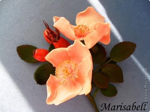 Веточка с нежными цветочками и плодами шиповника.  фото 6