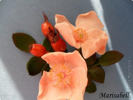 Веточка с нежными цветочками и плодами шиповника.  фото 7