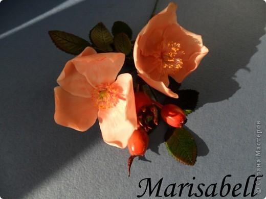 Веточка с нежными цветочками и плодами шиповника.  фото 8