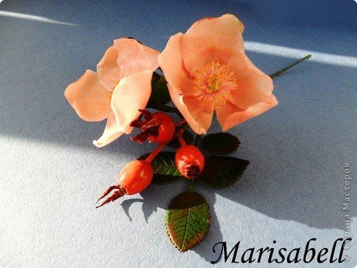 Веточка с нежными цветочками и плодами шиповника.  фото 2