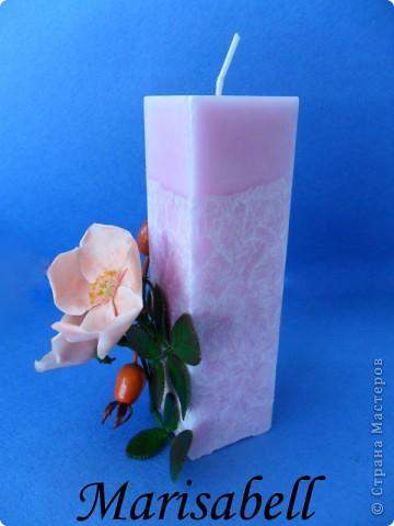 Веточка с нежными цветочками и плодами шиповника.  фото 16