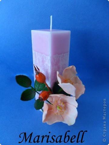 Веточка с нежными цветочками и плодами шиповника.  фото 17