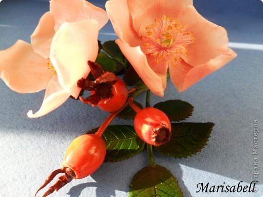 Веточка с нежными цветочками и плодами шиповника.  фото 3