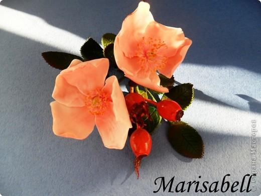 Веточка с нежными цветочками и плодами шиповника.  фото 1