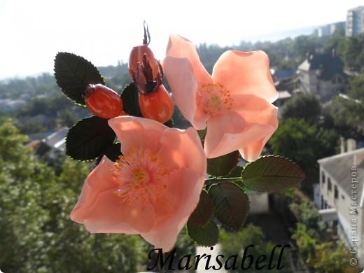 Веточка с нежными цветочками и плодами шиповника.  фото 10