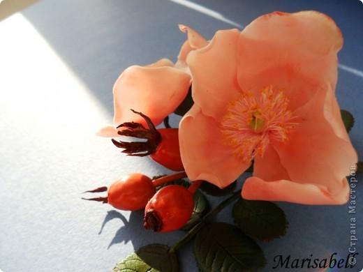 Веточка с нежными цветочками и плодами шиповника.  фото 4