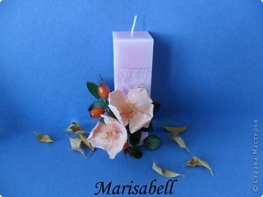 Веточка с нежными цветочками и плодами шиповника.  фото 19