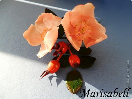Веточка с нежными цветочками и плодами шиповника.  фото 5