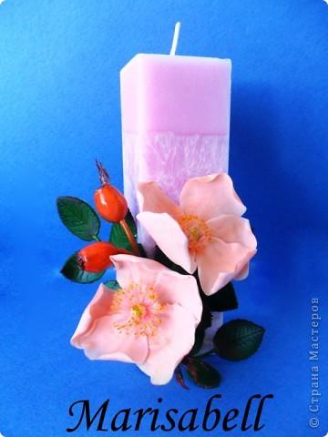 Веточка с нежными цветочками и плодами шиповника.  фото 13