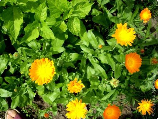 Летом мы жили на даче у бабушки. Бабушка очень любит цветы. На день рождения я вышила ей открытку с любимыми цветами. фото 4