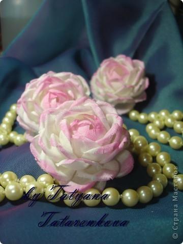 роза Николь фото 11