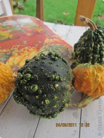 Осенний урожай фото 3