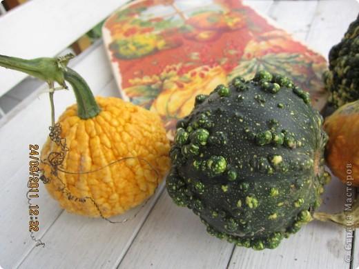 Осенний урожай фото 4