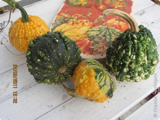 Осенний урожай фото 5