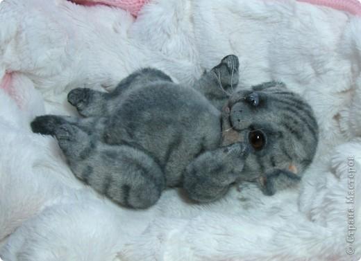 Бывают такие котята, которые буквально висят на маме-кошке и не могут насытиться)) По этому, вырастают упитанными, мурлыкающими от удовольствия, спокойными мылышами. И вот, наглядный примерчик)) Ну как же он любит покушать, и погреться о теплый животик))  фото 1