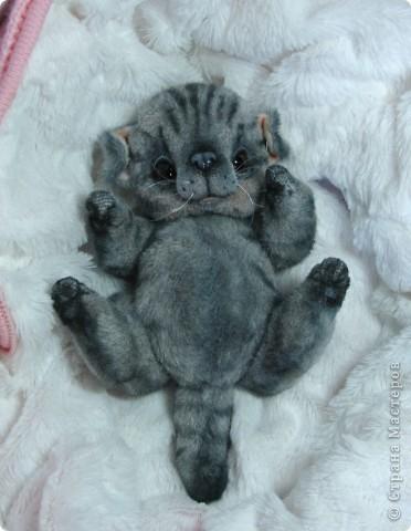 Бывают такие котята, которые буквально висят на маме-кошке и не могут насытиться)) По этому, вырастают упитанными, мурлыкающими от удовольствия, спокойными мылышами. И вот, наглядный примерчик)) Ну как же он любит покушать, и погреться о теплый животик))  фото 2