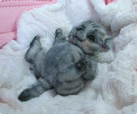 Бывают такие котята, которые буквально висят на маме-кошке и не могут насытиться)) По этому, вырастают упитанными, мурлыкающими от удовольствия, спокойными мылышами. И вот, наглядный примерчик)) Ну как же он любит покушать, и погреться о теплый животик))  фото 3