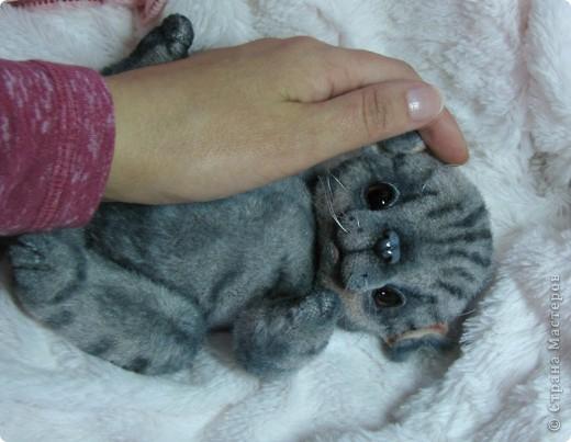 Бывают такие котята, которые буквально висят на маме-кошке и не могут насытиться)) По этому, вырастают упитанными, мурлыкающими от удовольствия, спокойными мылышами. И вот, наглядный примерчик)) Ну как же он любит покушать, и погреться о теплый животик))  фото 6