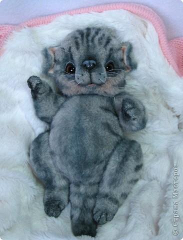 Бывают такие котята, которые буквально висят на маме-кошке и не могут насытиться)) По этому, вырастают упитанными, мурлыкающими от удовольствия, спокойными мылышами. И вот, наглядный примерчик)) Ну как же он любит покушать, и погреться о теплый животик))  фото 9